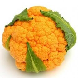 Orange cauliflower seeds