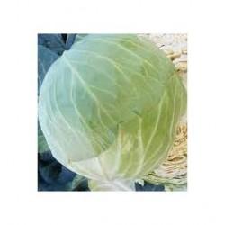 """""""Nozomi"""" round cabbage seeds"""