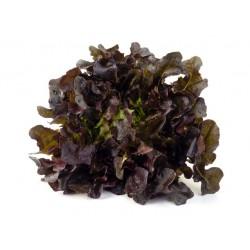 Red Oak Leaf lettuce seeds
