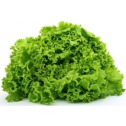 Light Gentilina lettuce seeds