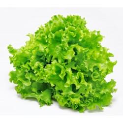 Mix Gentilina lettuce seeds