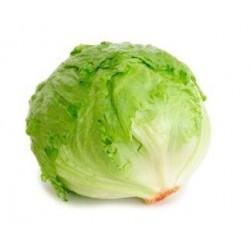 Regina dei Ghiacci Iceberg lettuce seeds