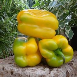 Yellow Cuneo pepper seeds