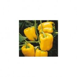 Nestor elongated yellow pepper seeds