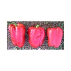 Favilla elongated red pepper seeds