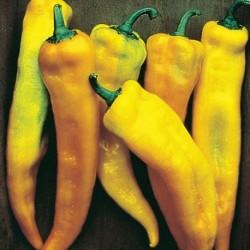 Yellow Bull Horn pepper seeds