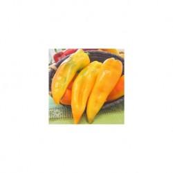 Yellow Ringo Bull Horn pepper seeds