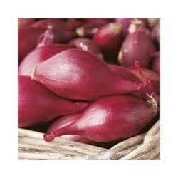 Red Long Tropea Onion Seeds