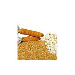 Semi mais per popcorn