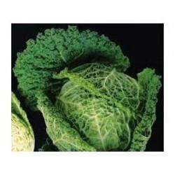 """Cornalyn"" savoy cabbage seeds"