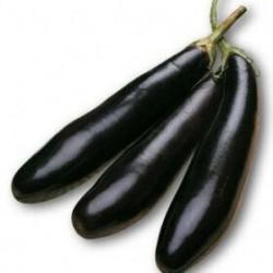 Semi melanzana lunga nera