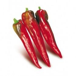 Red Bull Horn pepper seeds