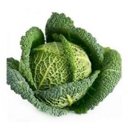 """""""Emerald"""" savoy cabbage seeds"""