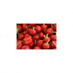 Hot round cherry pepper seeds