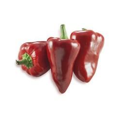 Benevento Pizzotello pepper seeds