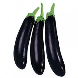 Semi melanzana lunga nera ideal