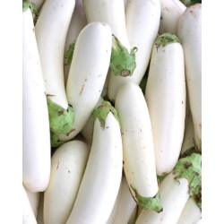 Semi melanzana lunga bianca
