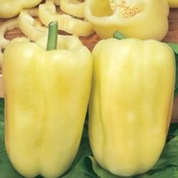 Zlutasek squared citrino pepper seeds