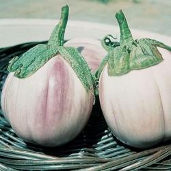 Semi Melanzana bianca sfumata rosa globosa