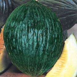 Semi di melone verde invernale