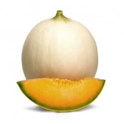 Semi di melone liscio honey moon
