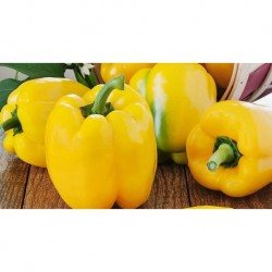 Squared yellow pepper seeds