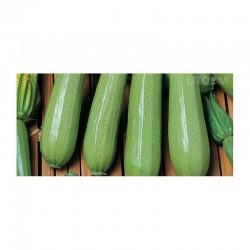 Semi zucchino chiaro Kos