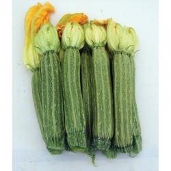 Semi di zucchino romano Iseo
