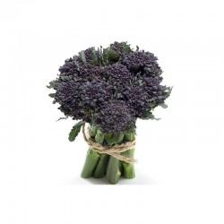 Santèe cabbage seeds