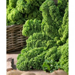 Green laciniated cabbage seeds Wind Bor