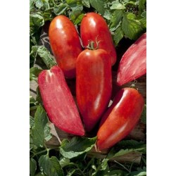 """San Marzano"" horn tomato seeds"