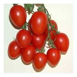 Fiaschetto clustered-tomato seeds