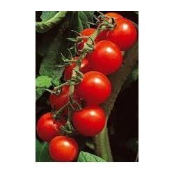 Paki cherry tomato seeds
