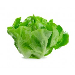 Spring mortarella lettuce seeds