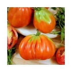 Riviera Cuorbenga beef tomato seeds