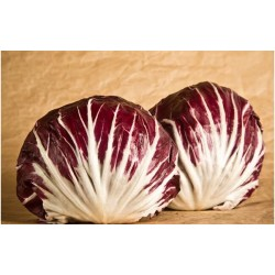 Red ball chicory medium/early seeds