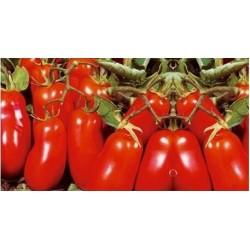 Half San Marzano Oliver tomato seeds