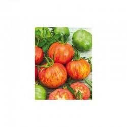 Tirouge striped round tomato seeds