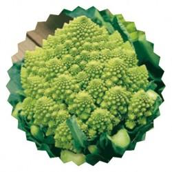 San Giuseppe Colosseo roman broccoli seeds