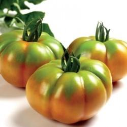 Marmolada ribbed tomato seeds