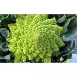San Giuseppe pomezio roman broccoli