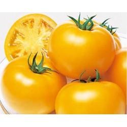 Ponderosa winter yellow tomato seeds