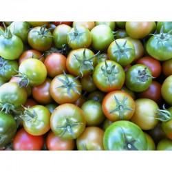 Verdinio Sicilian hang dwarf tomato seeds