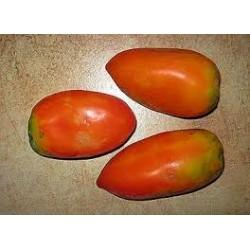 Nasone tomato seeds