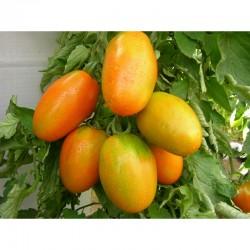 Nerina tomato seeds