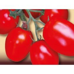 Tall Rio Grande oval tomato seeds