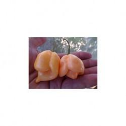 Dried Trinidad Moruga Scorpion Peach