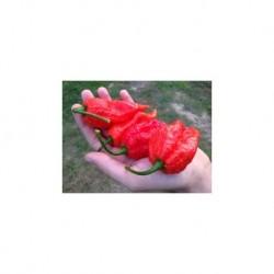 Dried Big Red Mama
