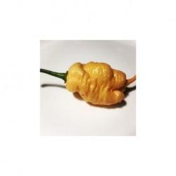 Dried Peach x drax