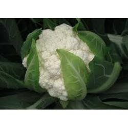 Utopia white cauliflower seeds